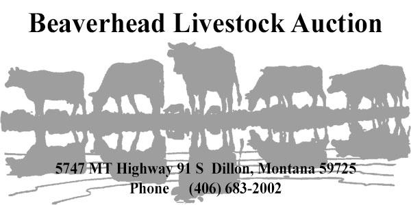 BeaverheadLivestock